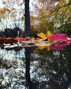 Dünya harika değil mı? . . . . . . . #harika#bahar#sonbahar#yaprak#beautiful#fall#foliage#yagmur#rain#puddles#love#aşk#mevsim#philadelphia #reflection#mirror#mirrorselfie#amateurphotography #photography #unexpected #amazing#igotmyphonewetforthisphoto