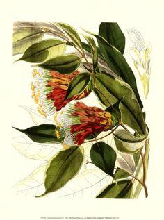 Vos plus belles photos de fleurs - Forums madmoiZelle.com