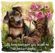 Goeie Nag, Special Quotes, Good Night, Teddy Bear, Dogs, Animals, Afrikaans, Art, Good Morning Beautiful People