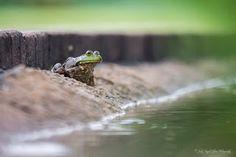 "Seeing Through God's Eyes: ""Intentional"" A frog at the Atlanta Botanical Garden."