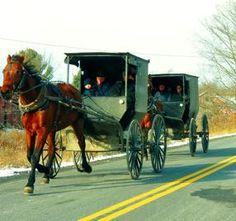 #Amish buggies