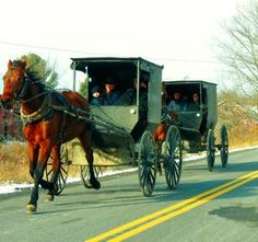 #Amish buggies