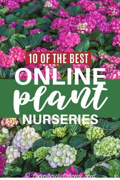 The Best Places To Buy Perennials, Trees and Shrubs Online #fromhousetohome #nurseries   #plants