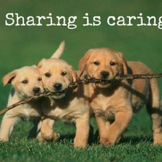Sharing is caring! Thank you all! Other