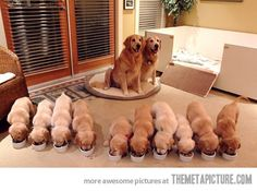 Happiness is 10 warm puppies!   Proud mommy and daddy!