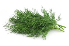 Find Fresh Dill stock images in HD and millions of other royalty-free stock photos, illustrations and vectors in the Shutterstock collection. Fresco, Salt Alternatives, Dill Dressing, Dill Weed, Veggie Wraps, Spicy Chili, Fresh Dill, Frijoles, No Bean Chili