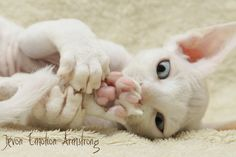 I don't care what people say I think that hairless cats are cute.