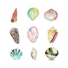 Watercolor shells