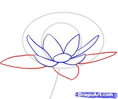 how to draw a water lily step 3