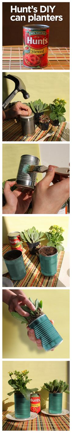 Weekend Project Idea: Turn your empty Hunt's cans into a beautiful window garden!  1. Using a hammer and nails, poke three holes in the bottom of can. 2. Paint or decorate can as you like. Use your imagination!  3. Fill can with dry potting mix.  4. Add your favorite plant. 5. Place on a saucer to avoid spillage from watering and enjoy!