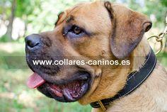 Collar doble cuero para perros Cane Corso hecho a mano por los mejores artesanales - C443