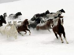 Horse Wallpaper Desktop Background (12)