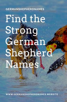Find the strong german shepherd names #stronggermanshepherdnames #stronggsdnames