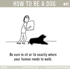 HOW TO BE A DOG: Be sure to sit or lie exactly where your human needs to walk.