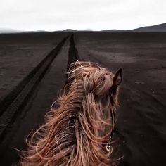 Care to gallop across the breathtaking plains of Iceland? Gigja Einarsdottir's photographs will swiftly transport you there. You can find these and many more under WALL ART > ARTISTS > GIGJA EINARSDOTTIR