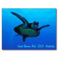 Postcard featuring a close up view of a Hawksbill Sea Turtle swimming out in the open in the clear blue waters of the Coral Sea on the Great Barrier Reef off the coast of QLD, Australia. #turtle #turtles #hawksbill #ocean #sea #nature #wildlife #seaturtle #hawksbillseaturtle
