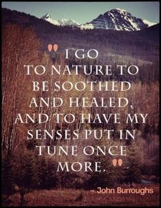 I go to nature to be soothed and healed and to have my senses put back in tune once more.