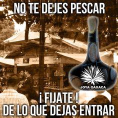 #joyadeoaxaca #maguey #agave #mezcal #oaxaca