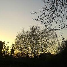 Siluetas prenocturnas #trees #sunset #nocturnal #nocturne #dämerung #kurzvordernacht #schablone #siluet
