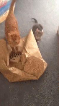 Brown bag special...