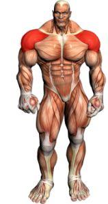 Benefits of Strong Shoulders