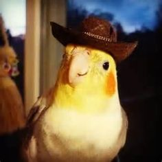 ¿Hay algo más adorable que un animal? si, estos 32 animales con sombrero