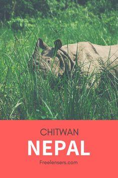 Safari in Nepal im Chitwan Nationalpark, Safari, Voyage Nepal, Parc National, Travel Companies, Blog Voyage, Parcs, Plan Your Trip, Asia Travel, Southeast Asia