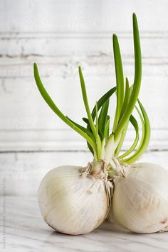 White onion with green shoots by Dobránska Renáta - Stocksy United Vegetables Photography, Fruit Photography, Pureed Food Recipes, Whole Food Recipes, Fresh Herbs, Fresh Fruit, Fresh Ginger, White Onion, Fruits And Vegetables
