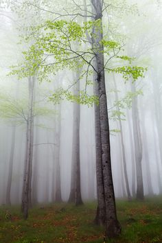 Photograph New Leaves by Martin Rak on 500px )
