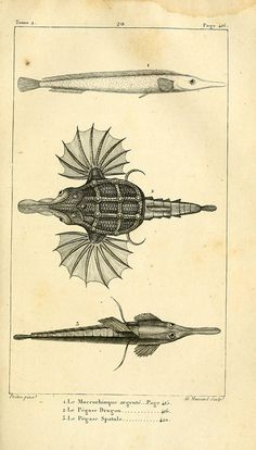 Fish 1819
