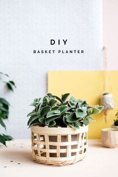 An easy beginner project to start basket weaving and add some beautiful plants to your home.