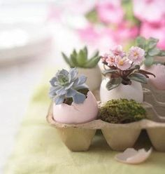 Easter Decoration and Crafts- Egg Planters. Eggshells as planters. table setting for holidays, spring, easter. Ostern Party, Diy Ostern, Color Crafts, Cactus Y Suculentas, Succulents Garden, Succulent Planters, Small Succulents, Succulent Favors, Planter Garden