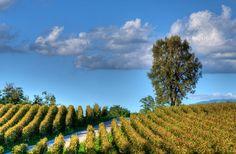 10 Italian Wine Regions You Need to Visit | Fodor's Travel