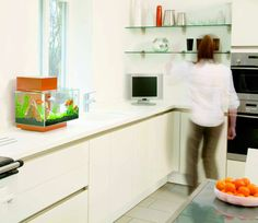 Inspirational Kitchen Design: Fluval Edge 23L aquarium in the kitchen. Cool design.