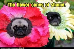 Flowers of Shame ..I know some pugs that would be so cute in these!