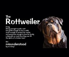 #Rottweiler #dog I love my rottie more than anything....