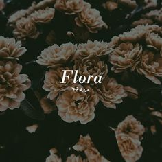 Flora logo concept.  It's always fun to create different designs even though it's not for a specific client or project.  #brandingdesign #branding #branddesign #brandidentity #identitydesign #identity #visualidentity #inspiration #designinspiration #designfeed #graphicandweb #graphicdesign #welovebranding #eyeondesign #inspofinds #kaelpidesign #branddevelopment #brandimage #brandingidentity #branddesigner #illustrator #flora #flowerlogo #floral Identity Design, Visual Identity, Flower Logo, Logo Concept, Illustrator, Journey, Design Inspiration, Graphic Design, Logos
