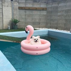 white pomeranian swimming on a pool float dog, cute dogs, puppy flamingo pool float Cute Little Animals, Cute Funny Animals, Funny Dogs, Cute Dogs And Puppies, Baby Dogs, Doggies, Dog Pool Floats, Lake Floats, Animals And Pets