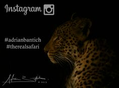 We are on instagram...give us a follow! https://instagram.com/adrianbantich/