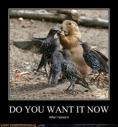 birds,food,nut,squirrel
