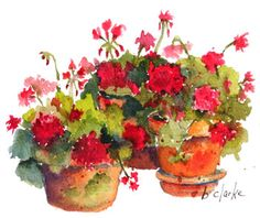 """""""Geraniums"""" - by Barb Clarke Watercolor Sketch, Watercolor Artists, Watercolor Landscape, Watercolor And Ink, Watercolour Painting, Watercolor Flowers, Watercolor Pictures, Watercolours, Red Geraniums"""