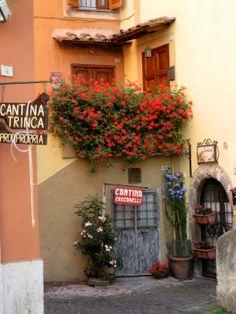 Frascati #Italy