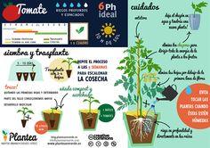 10 consejos para cultivar tomates
