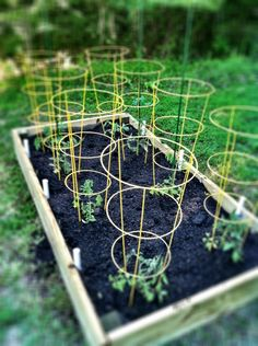 """DAD:  How to Build a Raised Garden Bed with pvc for """"hoops"""" to cover when necessary or for a hot bed early in the season. These things are necessary up north. Just lost tomatoes to frost last week! Will be heading out for som hoops and some PVC. Falls under why didn't I think of that sooner."""