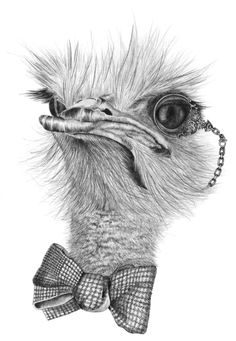 Ostrich Art Print by etiennealexandra Animal Illustrations, Animal Sketches, Art Sketches, Realistic Animal Drawings, Cool Art Drawings, Frog Sketch, Stippling Drawing, Alpaca, Zentangle Patterns