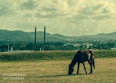 Horse in the city by josejulioh