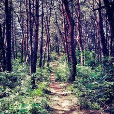 【chyongha_o3o】さんのInstagramをピンしています。 《*계획하에 욕먹기 난 사람들한테 딱 요만큼만 욕먹기로 결심했어 그러니까 난 이걸 할꺼야! 왜냐면 이걸 하면 사람들은 딱 이만큼만 날 욕할꺼거든 / /재업/#산 #나무 #tree #気 #풍경 #사진 #사진스타그램 #素晴らしい #景色 #風景 #写真 #自然  #nature #scenery #dailyphoto #photo #photography #mountain #山 #숲 #korea #forest #森 #road #nice #道 #sunset #like #evening #sunlight》