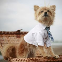 I'm not usually the type to dress up a pet...but THIS is freakin adorable.  he's ready to go to work!!