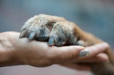 Hand and paw by Shutterstock. - How to stay healthy when your dog is terminally ill - by Chris Corrigan Mendez