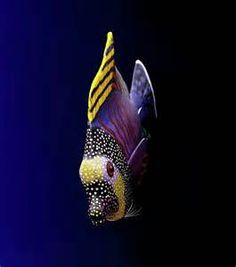 Tropical Fish - Yahoo Search Results Yahoo Image Search Results